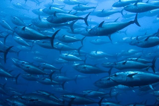 Garciden - El mar nuestro futuro