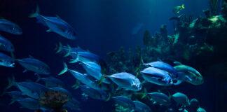 garciden-pesca-sostenible-calidad