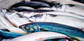 Garciden-beneficios-pescado-fresco